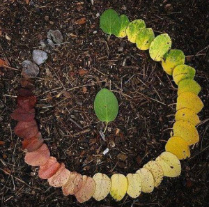 leaf life cycle
